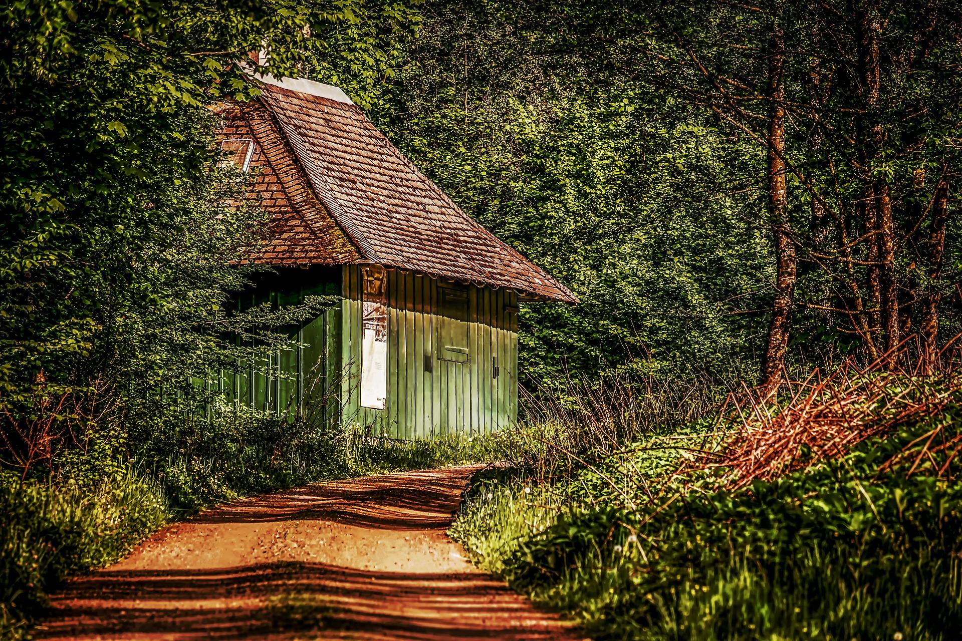 dřevěný dům v lese