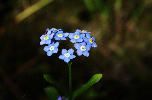 srdce z modrých květin